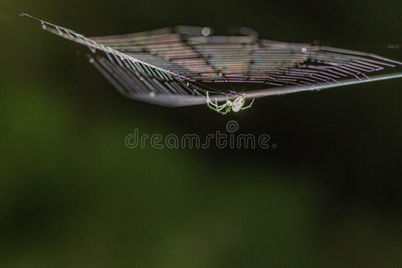 Ogląda Za, pająk obrazy royalty free