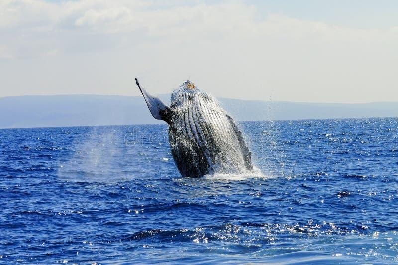 oglądanie wieloryb zdjęcia royalty free