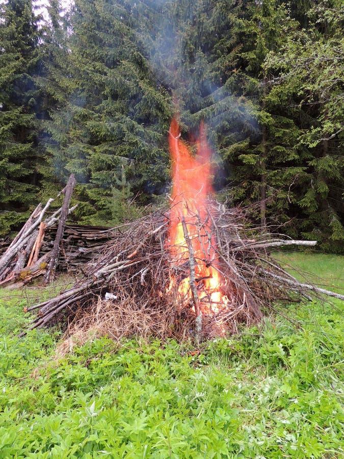Ognisko na lasowej krawędzi obraz stock