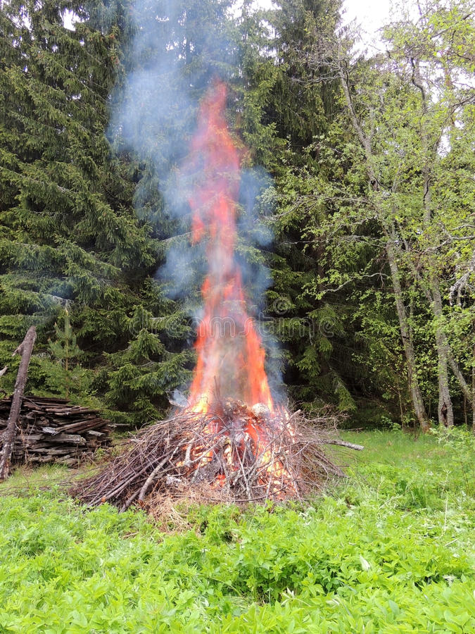 Ognisko na lasowej krawędzi zdjęcie stock