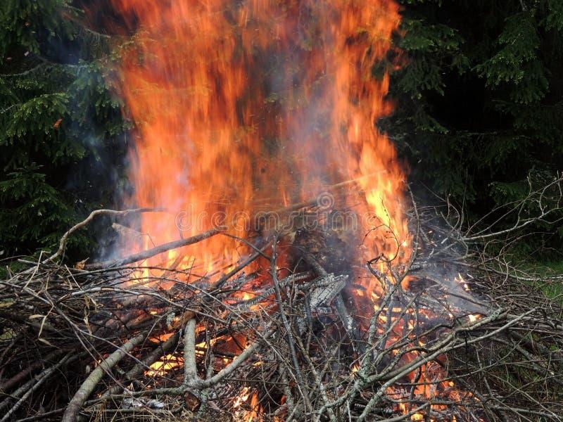 Ognisko na lasowej krawędzi obrazy royalty free