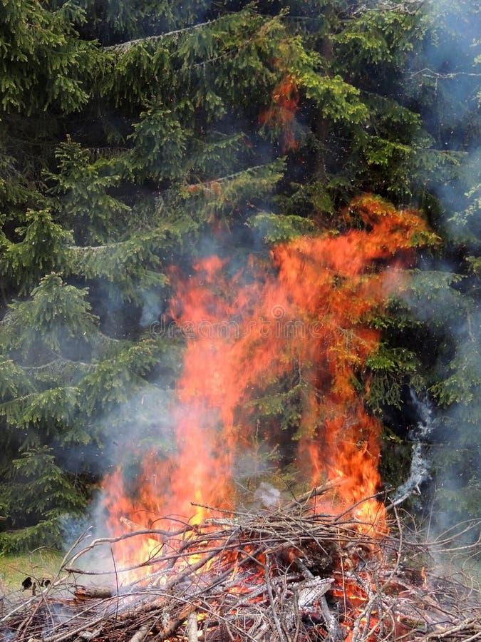 Ognisko na lasowej krawędzi zdjęcia stock