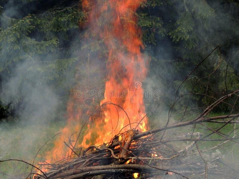 Ognisko na lasowej krawędzi zdjęcie royalty free
