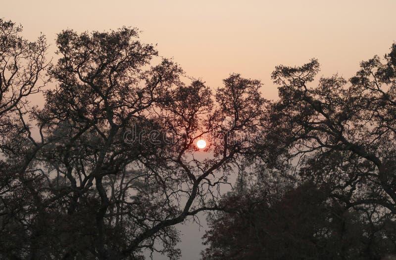 Ognisty słońce Obramiający drzewami zdjęcia royalty free