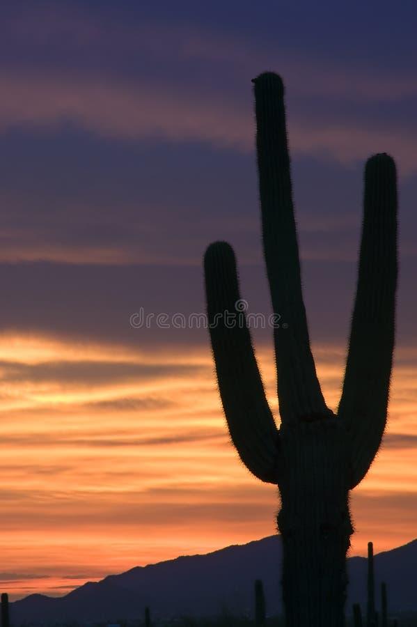 ognisty sonoran pustynny słońca fotografia royalty free