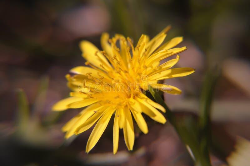 Ogräs eller blomma royaltyfria bilder