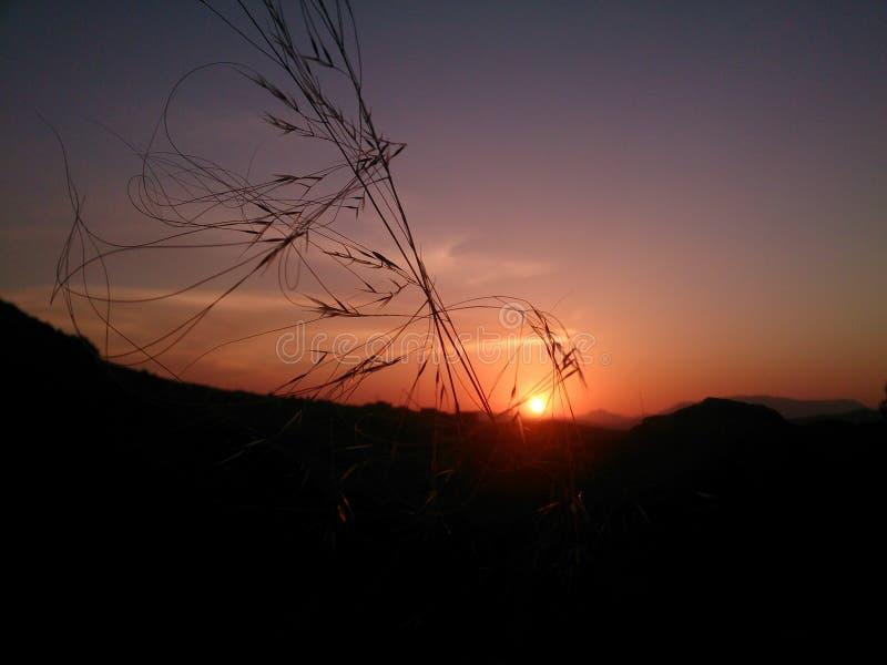 Ogräs i solnedgång royaltyfria foton