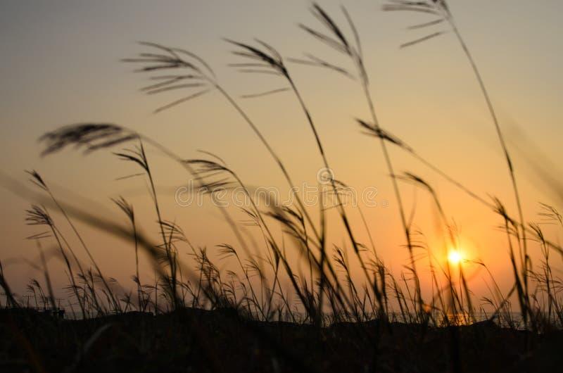 Ogräs i solnedgång royaltyfri bild