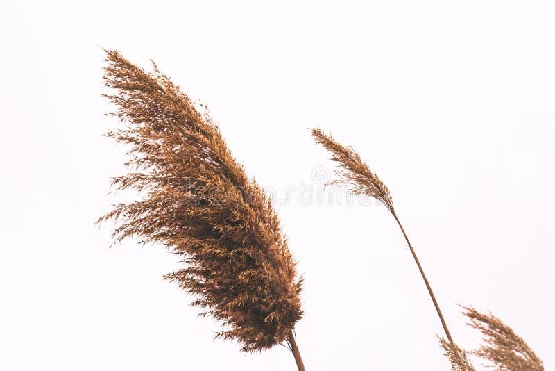 Ogräs i vinden royaltyfria bilder