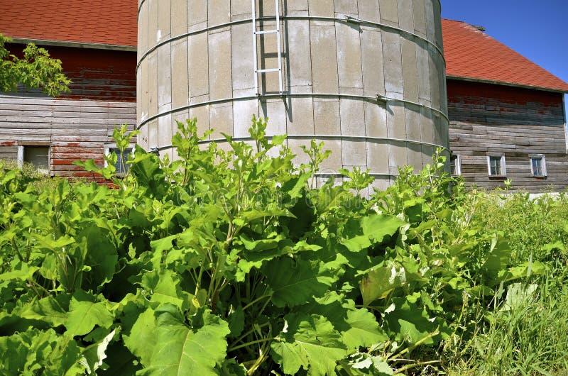 Ogräs och lövverk växer runt om en gammal silo och ladugård royaltyfri fotografi