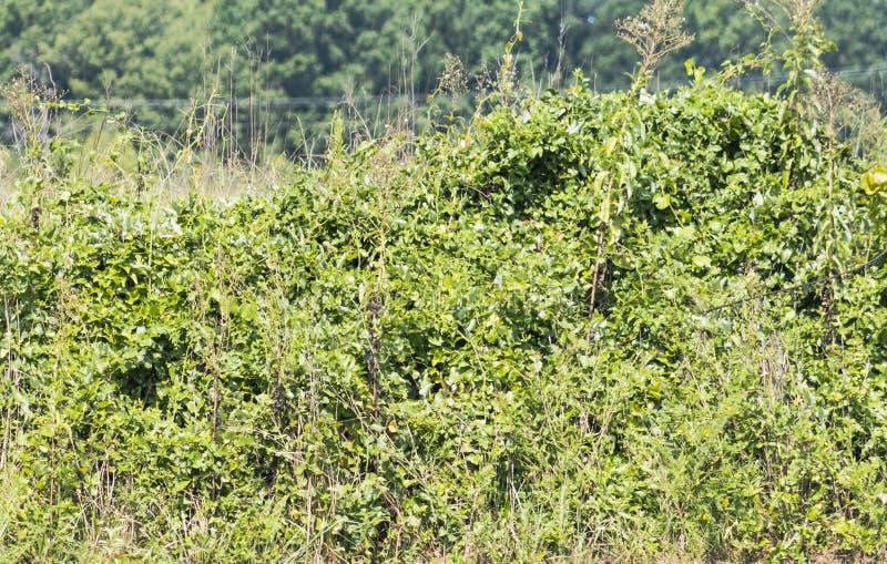 Ogräs och vinrankor vid flodstranden royaltyfri fotografi