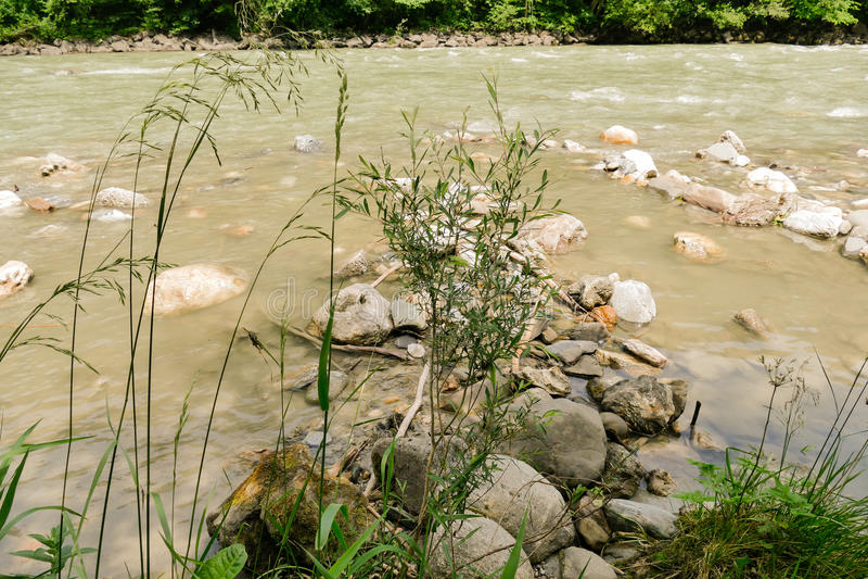 Ogräs vid floden royaltyfri bild