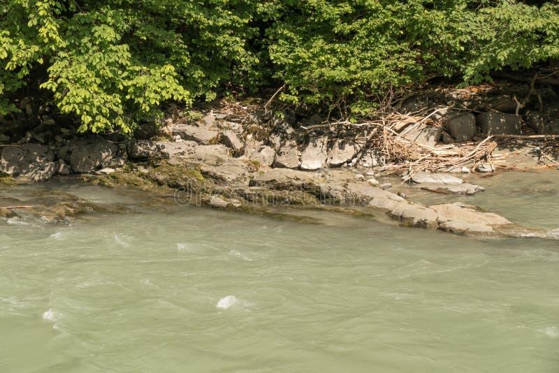 Ogräs vid floden arkivbilder