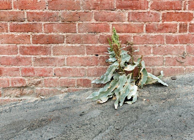 Ogräset växer var ingenting bör växa arkivbild