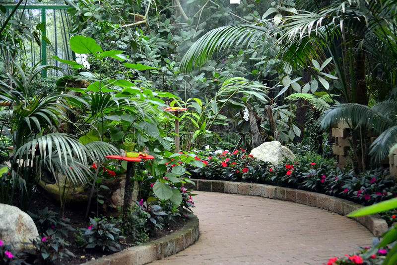 Download Ogród zdjęcie stock. Obraz złożonej z roślina, ogród - 57669614