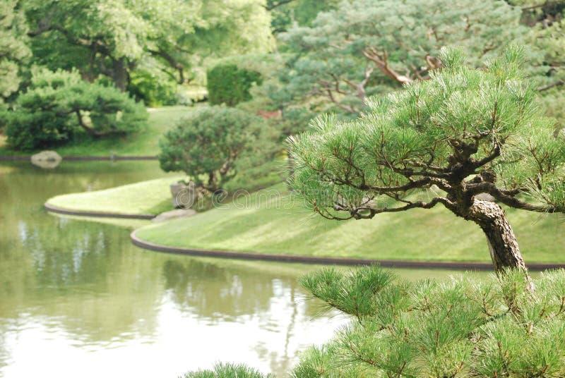 Ogród Botaniczny 8 zdjęcie stock