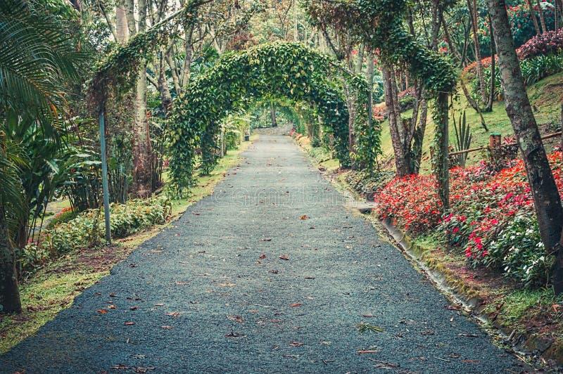 Ogród Botaniczny Inny Kientlzer obrazy royalty free