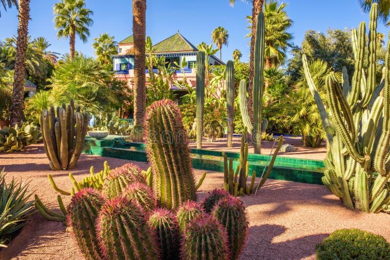 Ogród botaniczny Jardin Majorelle w Marrakesh zdjęcia stock