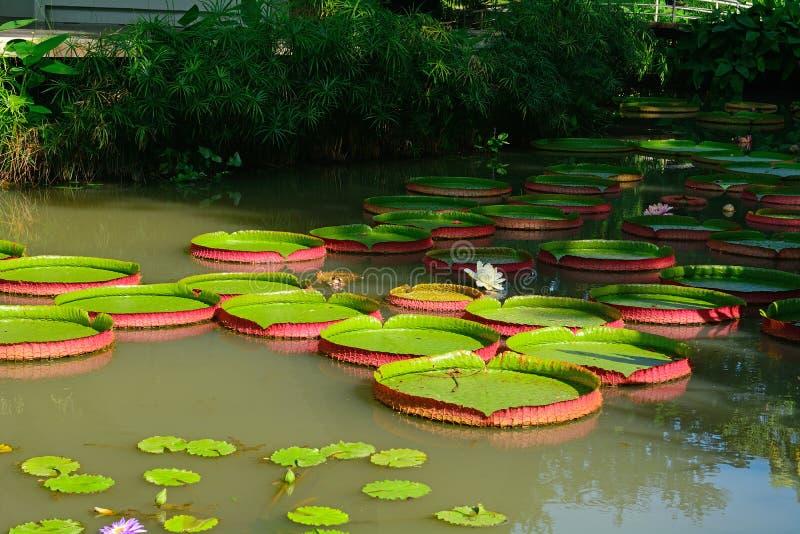 Ogród botaniczny, Singapur zdjęcie stock