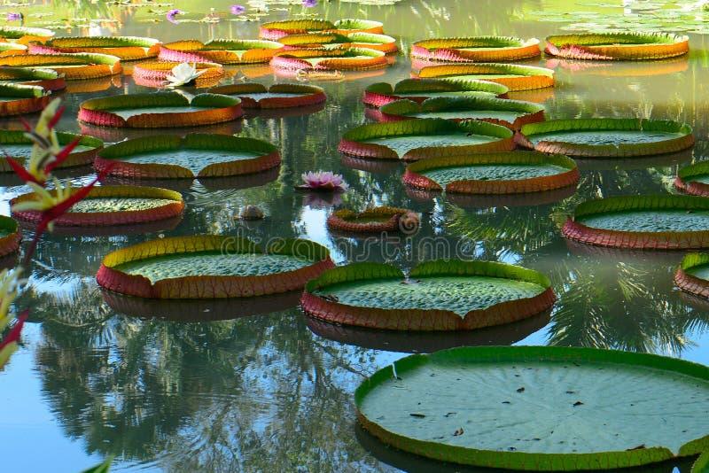 Ogród botaniczny, Singapur fotografia stock