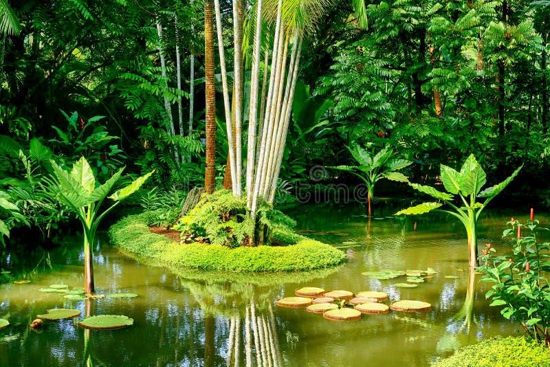 Ogród botaniczny, Singapur obrazy royalty free