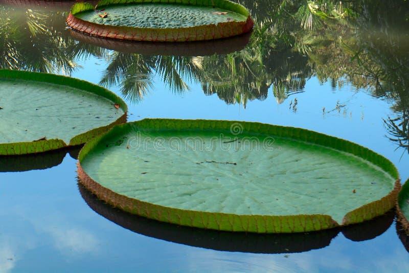 Ogród botaniczny, Singapur zdjęcia royalty free
