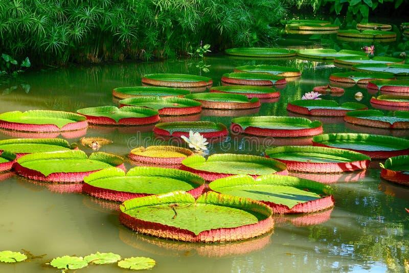 Ogród botaniczny, Singapur zdjęcia stock