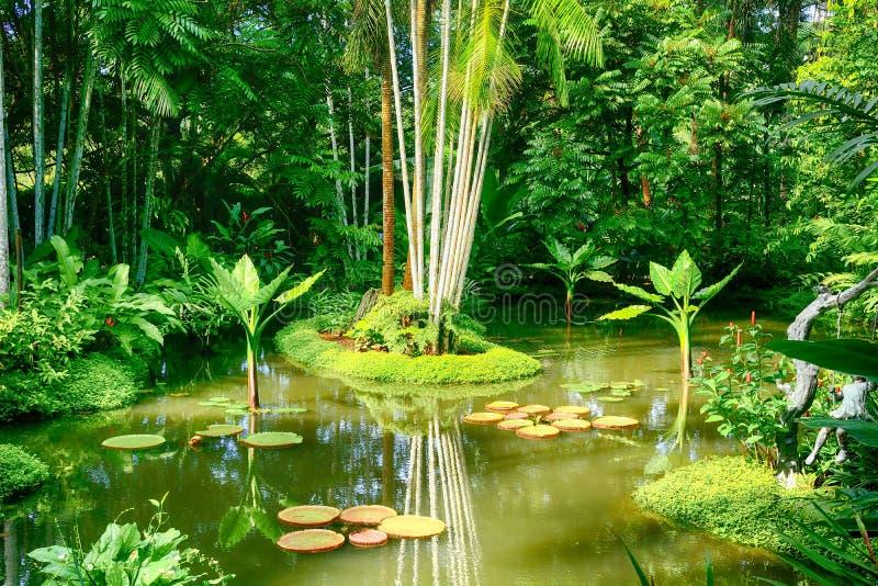 Ogród botaniczny, Singapur obraz stock