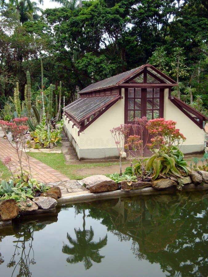 ogród botaniczny tropikalny zdjęcia royalty free