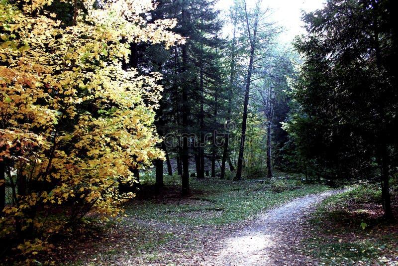 Ogród botaniczny w Akadem Gorodok zdjęcie stock