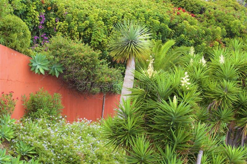 Ogród botaniczny w Funchal, madera obrazy stock