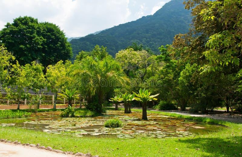 Ogród botaniczny w Rio De Janeiro zdjęcia royalty free