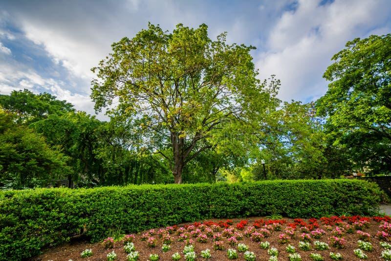 Ogród i drzewa przy uniwersytet georgetown, w Waszyngton, DC zdjęcie royalty free