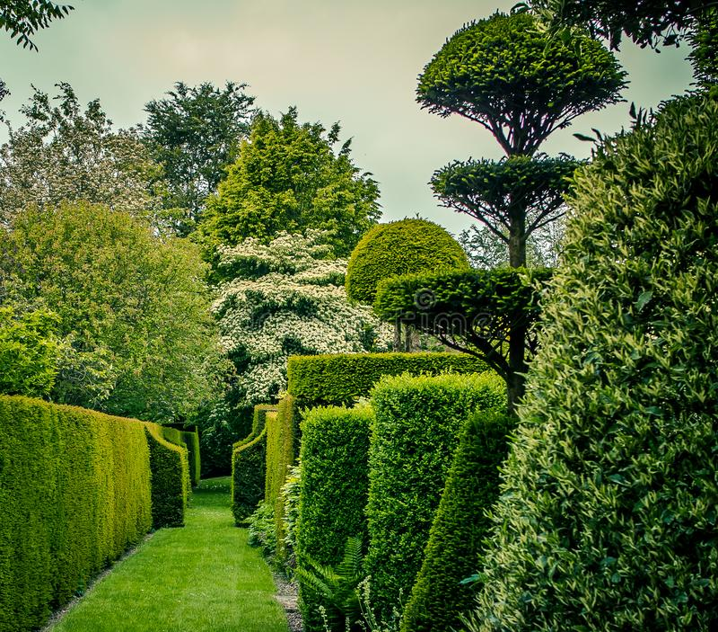Ogród i podjazd z krzakami żyłowaliśmy w kolorze zdjęcie royalty free