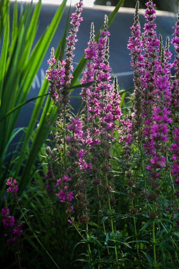 Ogród jeden od uczestników fotografia stock
