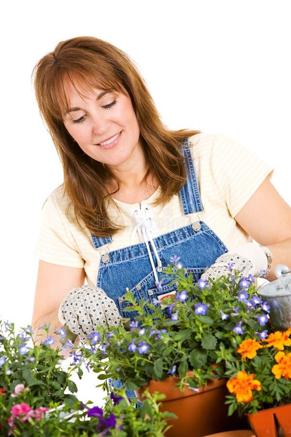 Ogród: Kobiety działanie Puszkować rozsady Dla Ona Ogrodowa obraz stock