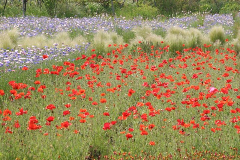 ogród kwiatów zdjęcie stock