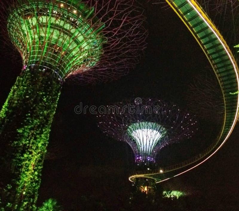 Ogród Podpalanym nocy światła przedstawieniem w Singapore obraz royalty free