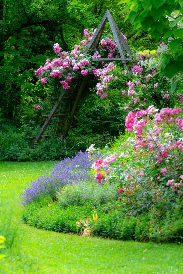 Ogród różany idylliczny zdjęcia royalty free