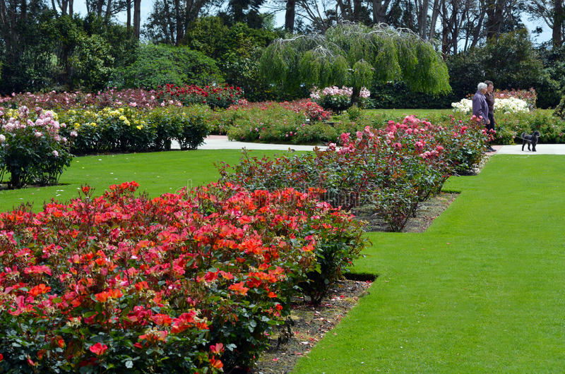 Ogród różany Palmerston północ NZL zdjęcie stock
