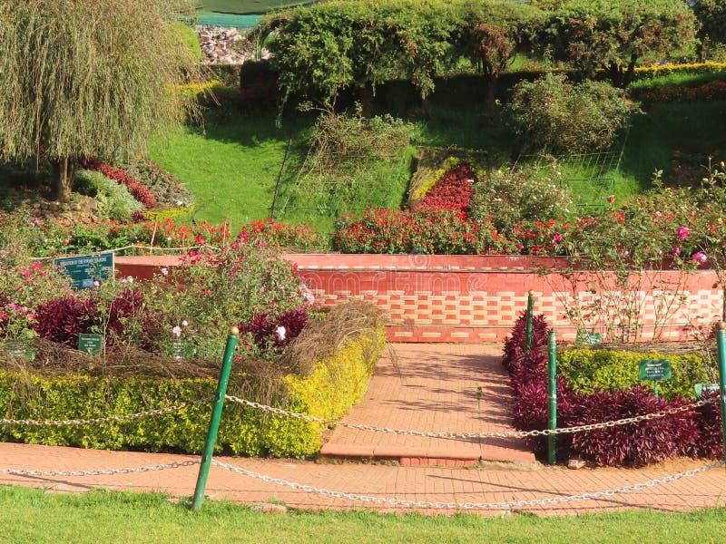 Ogród różany w Ooty obraz stock