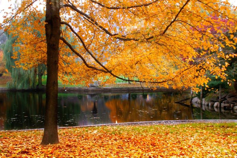 ogród społeczeństwa bostonu fotografia royalty free