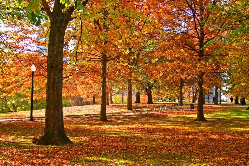ogród społeczeństwa bostonu zdjęcia royalty free