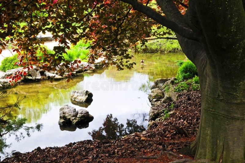 ogród stawowy zen. zdjęcie stock