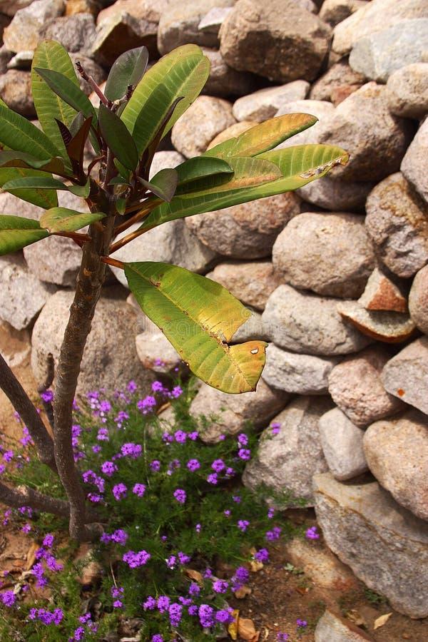 ogród szczególne fotografia royalty free