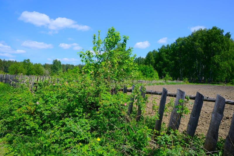 Ogród w drewnach fotografia stock