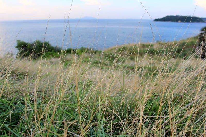 Ogród w Promthep przylądku Morza błękit Tło zdjęcia stock