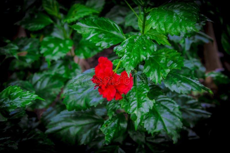 Ogród w Tajlandia Chatuchak 5 zdjęcia royalty free