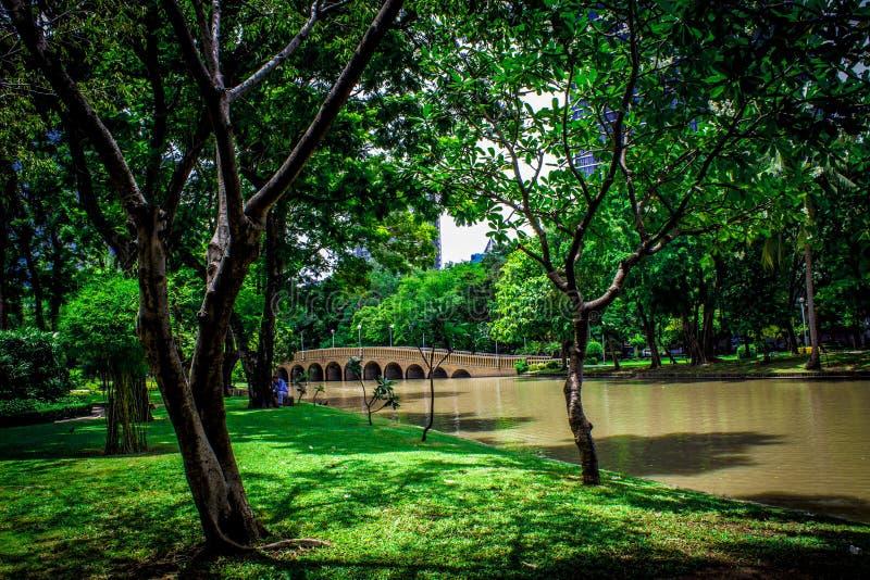 Ogród w Tajlandia Chatuchak 36 obrazy royalty free