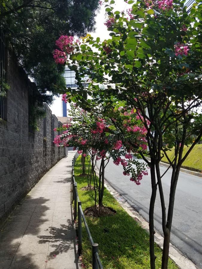 Ogród w ulicie obraz stock
